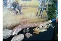 Expo Paleontología 2
