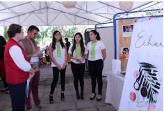 UVAQ - Online Michoacán México
