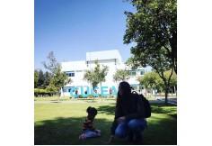 Foto Centro UDG - Universidad de Guadalajara - Sede Guadalajara México