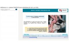 Centro Portal Virtual de Actualización Veterinaria Miguel Hidalgo México