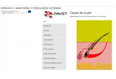 Foto Portal Virtual de Actualización Veterinaria Miguel Hidalgo México