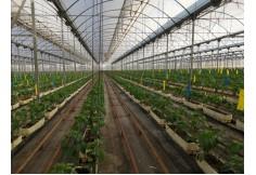 ISAM, International School of Agri Management Almería Centro